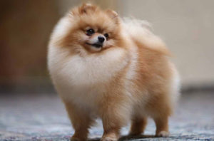Buy-a-dog
